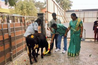 vijayakanth-celebrated-maatu-pongal-photo-gallery