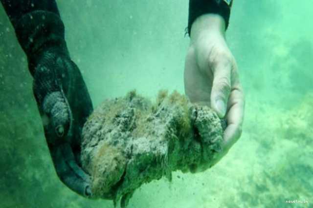 australia-s-heatwave-killed-so-many-marine-plants