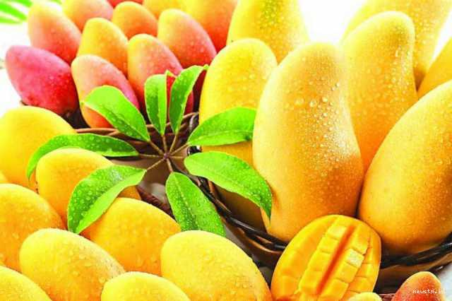 easy-mango-recipes