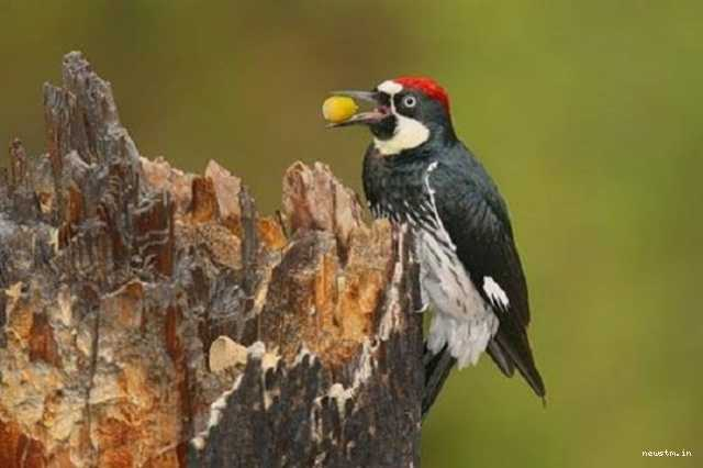 what-does-the-woodpecker-say
