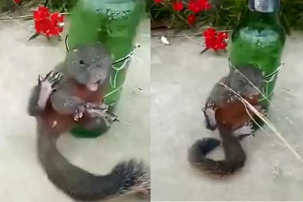 squirrel-tied-to-a-beer-bottle-whipped-by-chinese-farmer