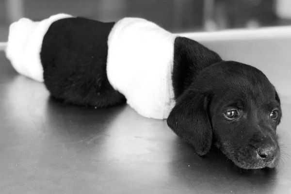 puppy-dies-after-four-feet-cut-off-in-turkey