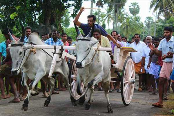 only-for-jallikattu-back-to-betta