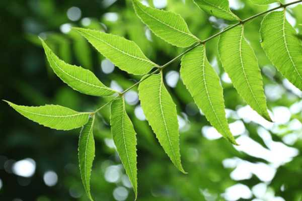 benefits-of-neem-for-this-monsoon