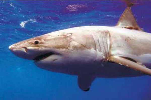 20-year-old-killed-by-a-shark-in-america