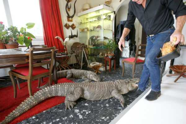 frenchman-shares-home-with-over-400-animals-including-alligators