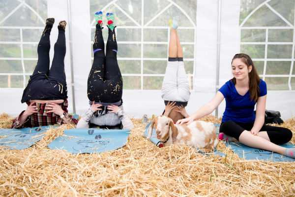 goat-yoga-with-wine-happening-in-hillsboro-this-week