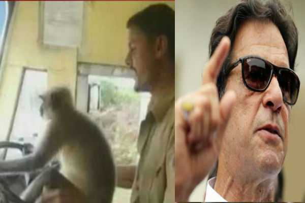 imran-khan-s-rival-uses-indian-monkey-on-wheel-video-to-mock-his-government