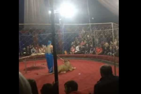 caught-on-video-lion-slashes-girl-s-face-at-circus-in-russia