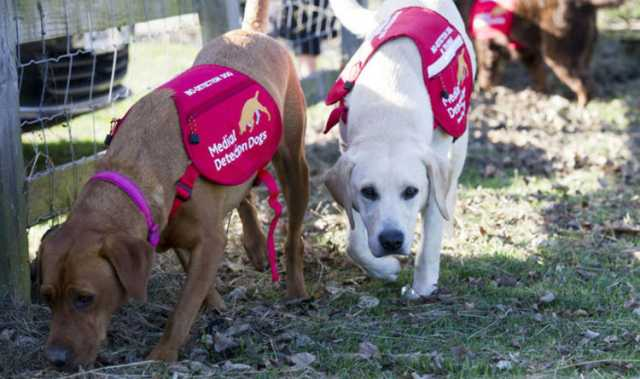 dogs-trained-to-detect-malaria-victim