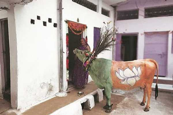 madhya-pradesh-polls-bjp-s-politics-turns-cow-into-party-campaigner