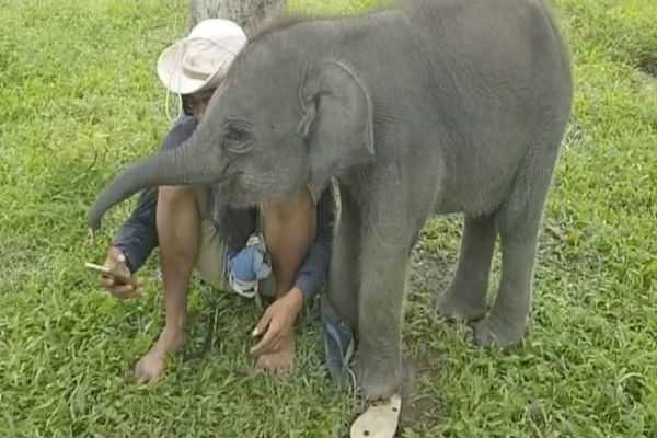 cheeky-baby-elephant-tries-to-steal-her-human-friend-s-phone-from-his-hand