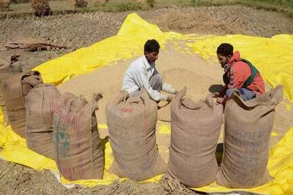 extension-of-norms-for-mandatory-packaging-in-jute-materials