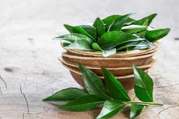 are-you-allocating-the-curry-leaves-in-food