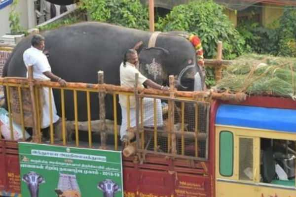 tirchy-temple-elephants-sent-to-elephants-refreshing-camps