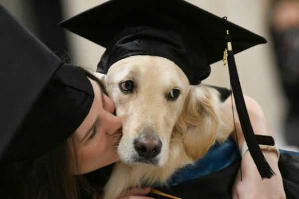 service-dog-griffin-gets-an-honorary-diploma-from-clarkson-university