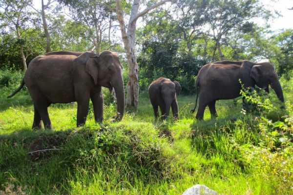 nilgiris-masinakudi-tourist-spot-special-story