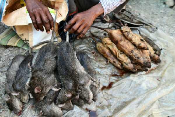 assam-rat-meat-rupees-200-per-kg