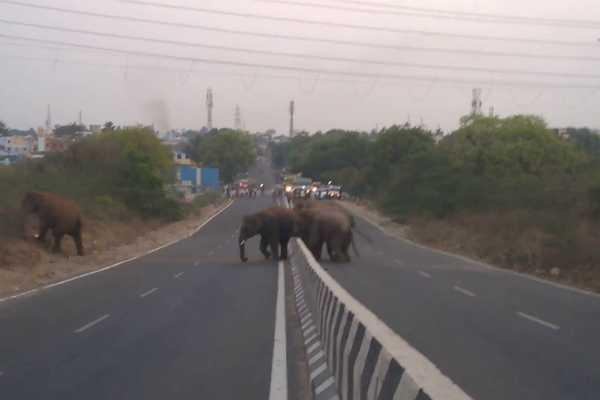 kovai-elephants-issue