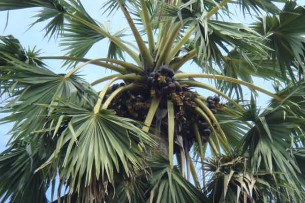 palm-tree-special-story