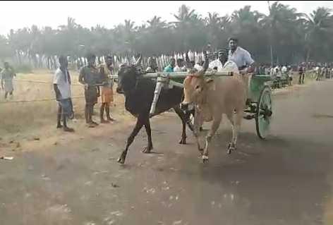 coimbatore-bulls-racked-in-rack-law-racing