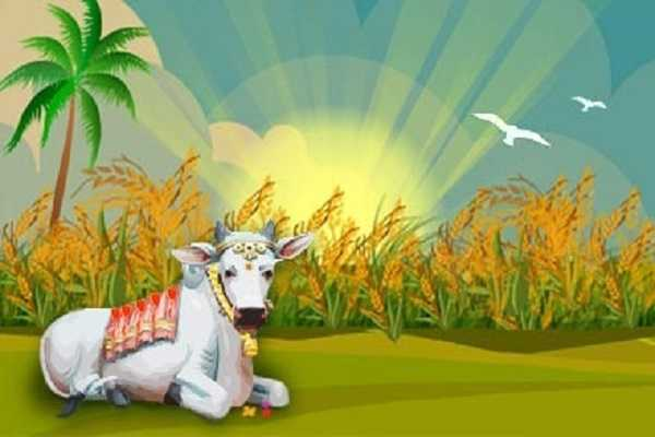 pongal-special-one-day-to-thank-our-livestock