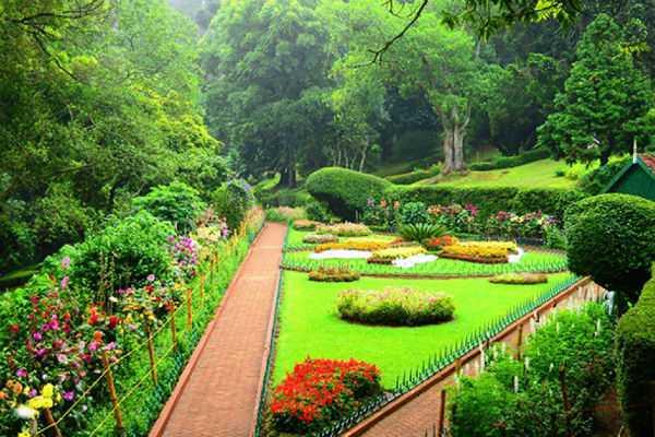 green-rose-flower-at-kunnoor-sims-park