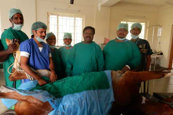 nellai-operation-success-for-horse