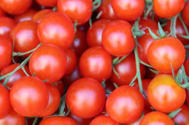 tomato-price-high