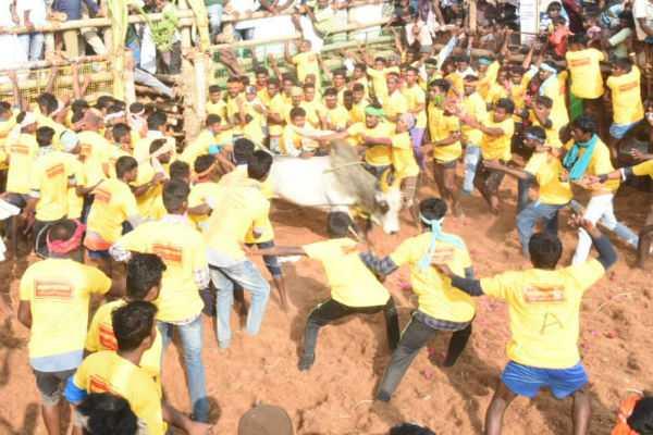 thachankurichi-jallikattu-competition