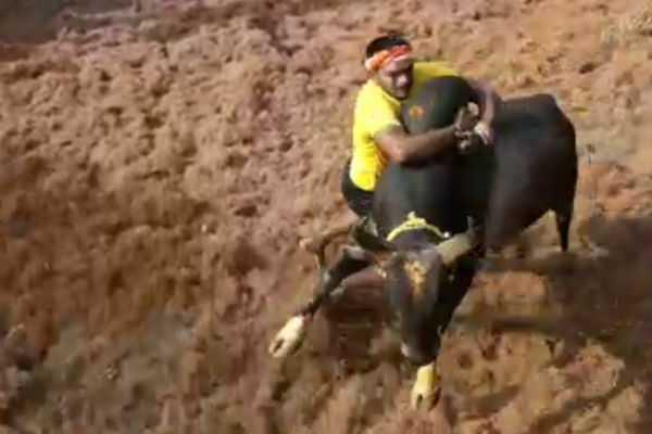 start-booking-for-bulls