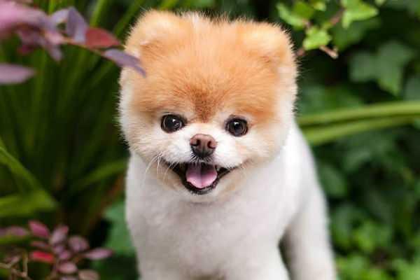 the-world-s-cutest-dog-dies
