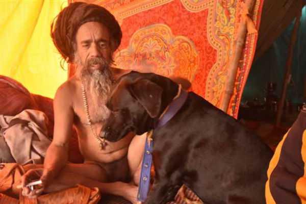dogs-are-the-heros-of-kumbhamela