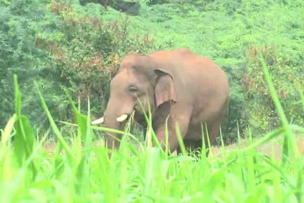 2-kumki-elephants-to-visit-coimbatore