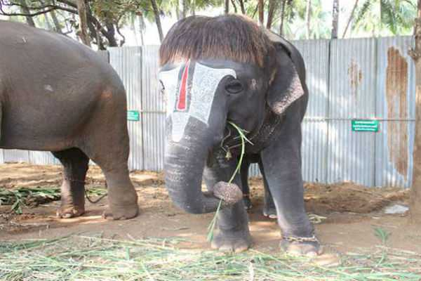 elephants-with-concern-for-farewell