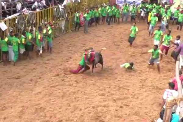lalgudi-jallikattu-competition-750-bulls-participation