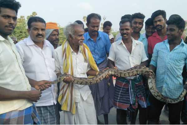 10-feet-long-python