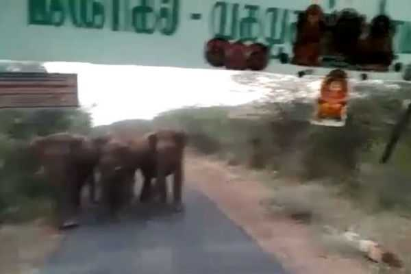 elephants-stood-in-front-of-government-bus