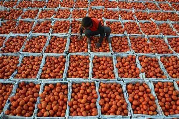 mp-tomato-farmers-won-t-export-produce-to-pakistan