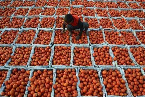 pakistan-tomato-is-being-sold-at-rs-250-per-kg