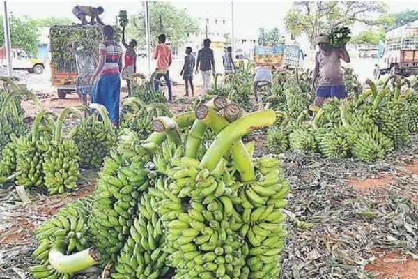 the-fall-in-banana-sales-is-due-to-the-increase-in-prices
