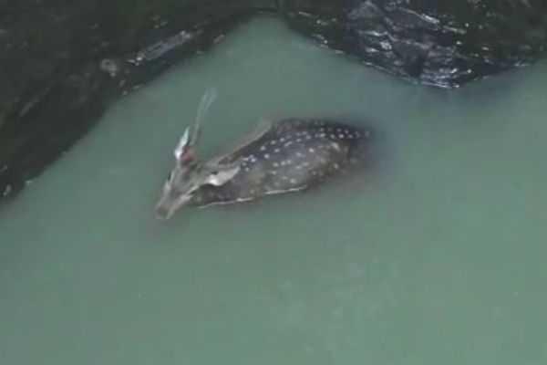 deer-fallen-into-the-well