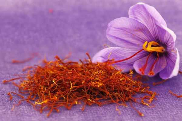 saffron-is-the-most-expensive-spice-in-the-world