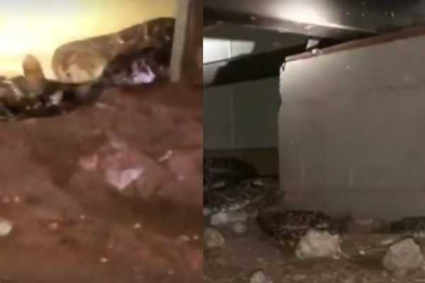 texas-man-spots-45-rattlesnakes-under-his-home