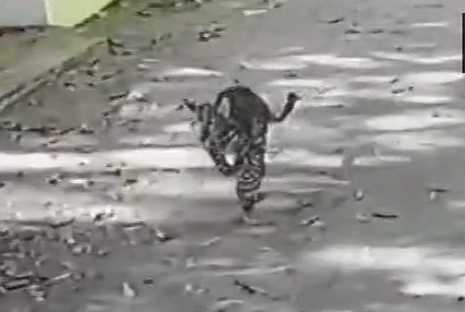 mumbai-leopard-runs-amok-at-residential-building