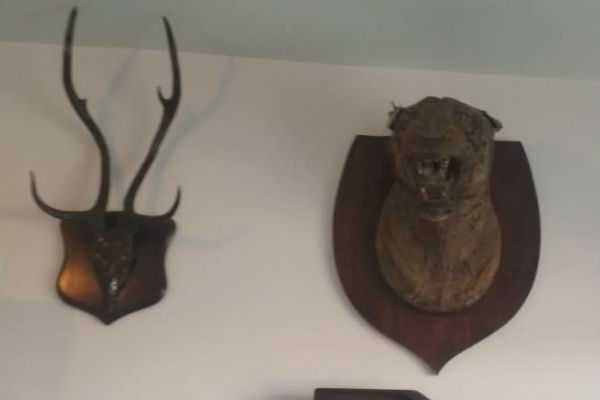 trophies-of-black-buck-tiger-deer-leopard-etc-have-been-recovered-from-residence-of-ashwin-sharma