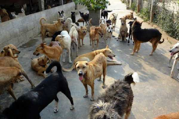 mumbai-housing-society-slaps-rs-3-60-lakh-fine-for-feeding-stray-dogs