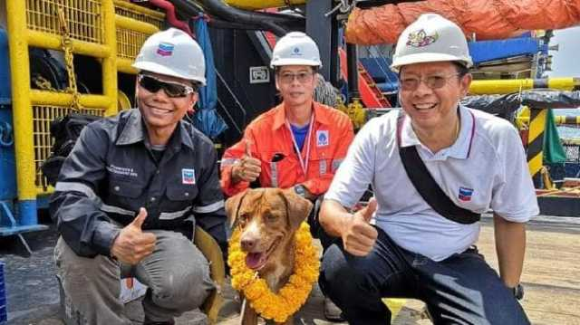 stranded-dog-is-rescued-209km-out-to-sea