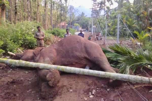 elephant-death-due-to-the-electricity-struck-in-coimbatore