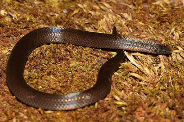 kerala-a-snake-was-found-at-a-polling-booth-in-kannur-s-kandakai